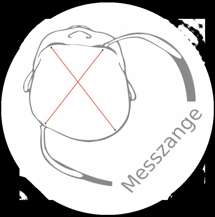 Plagiocephalus messen